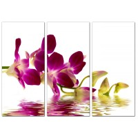 Orchids Canvas Wall Art Set of 3 for your Living Room
