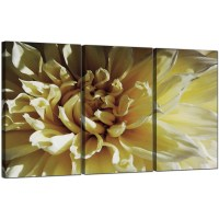 Flower Canvas Art Set of 3 for your Living Room