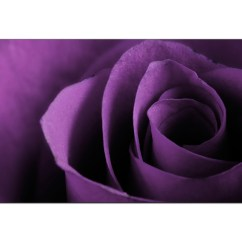 Red Sofa White Living Room Decoration Pictures Modern Purple Canvas Art Of A Rose Flower