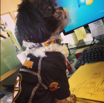 Verndale pup supports the Boston Bruins