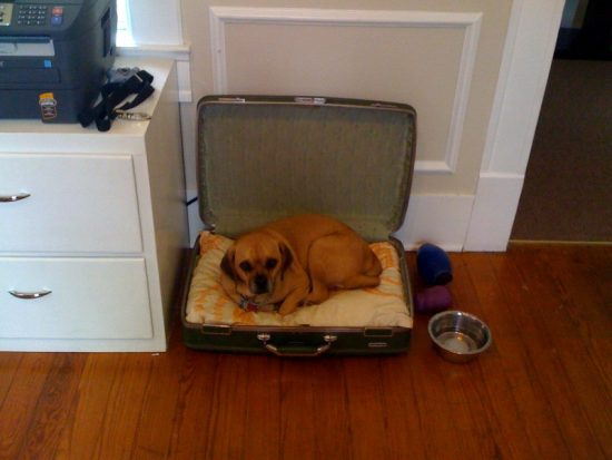 buddy in suitcase photo