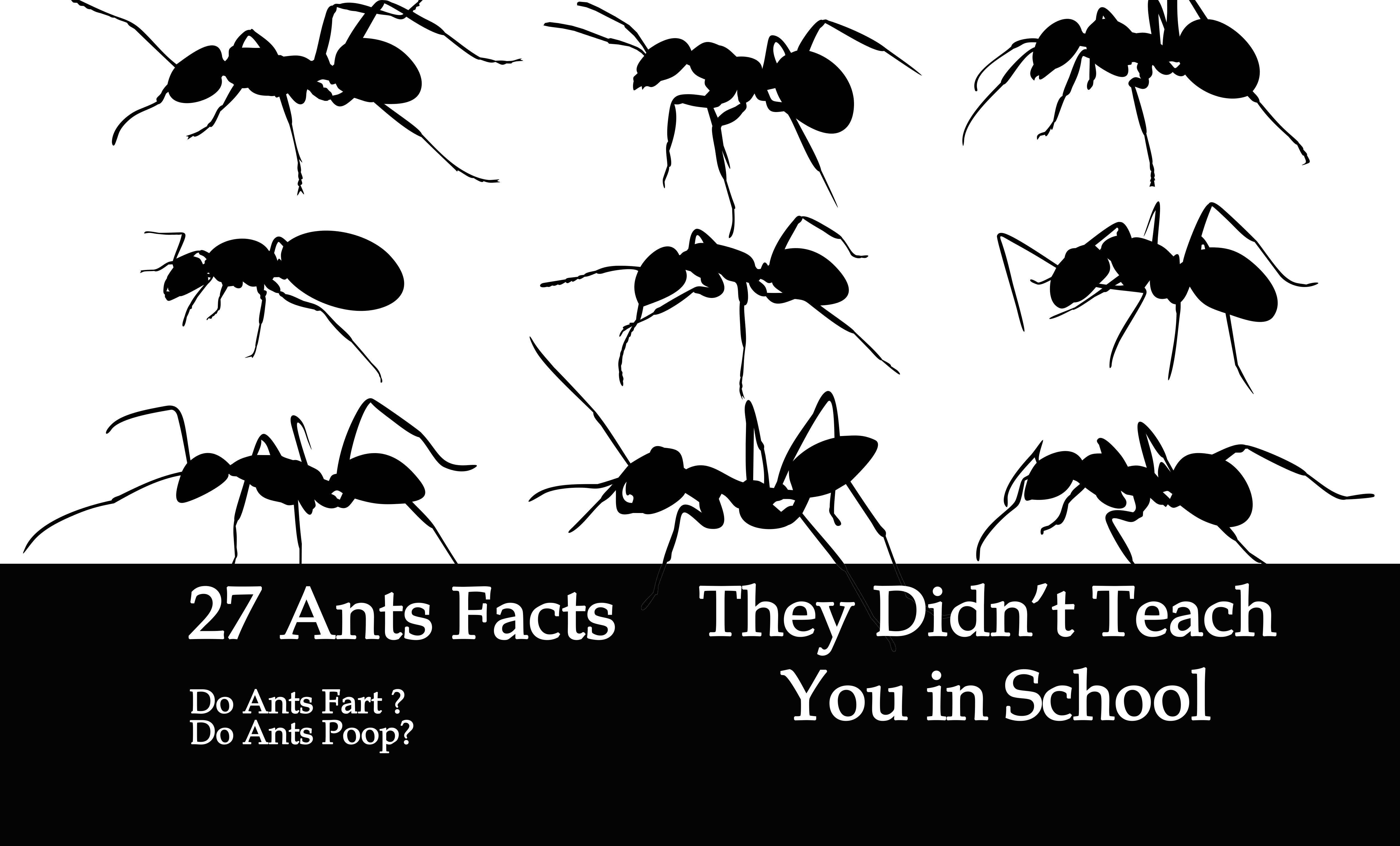 27 Surprising Ant Facts They Didn't Teach You in School