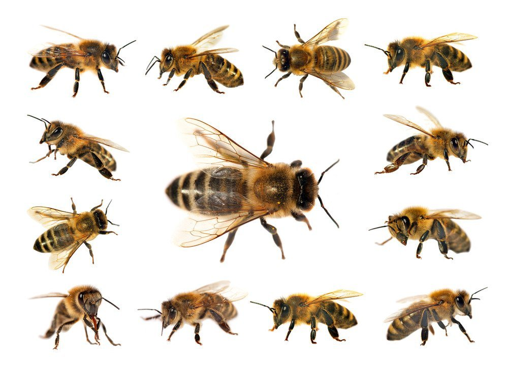 bee identification guide top
