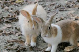 http://yossense.com/rabbit-island/