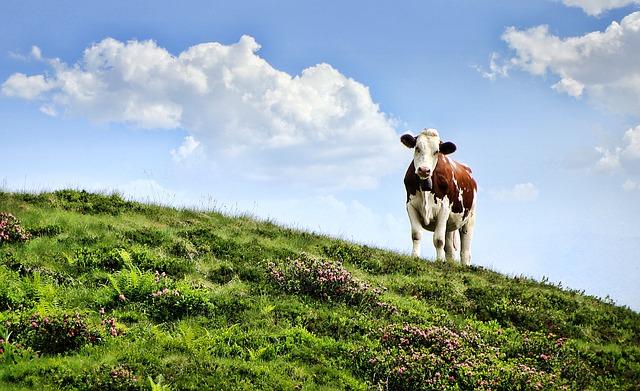 Fleisch von gras-gefütterten Tieren ist am gesündesten