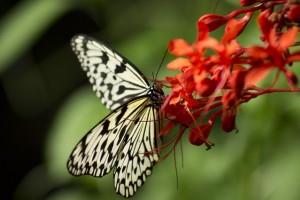 gratitude-pour-soi-leger-papillon