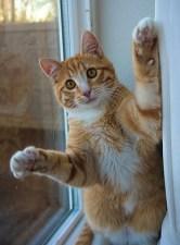 chat-surpris