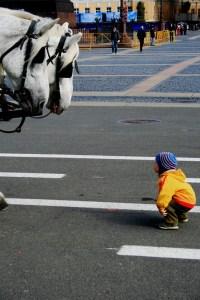 enfant-curieux-chevaux
