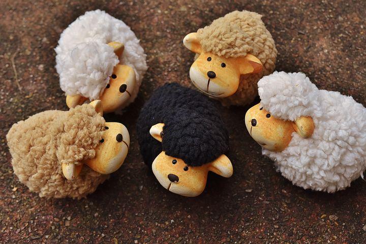 Le mouton noir de la famille