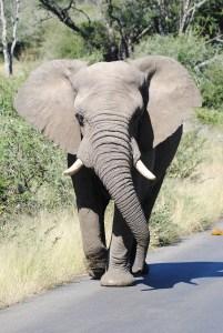 elephant-4250190_1280
