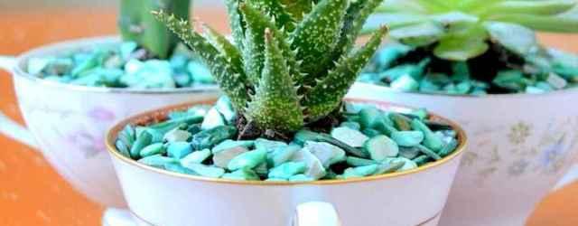 50 DIY Summer Garden Teacup Fairy Garden Ideas (29)