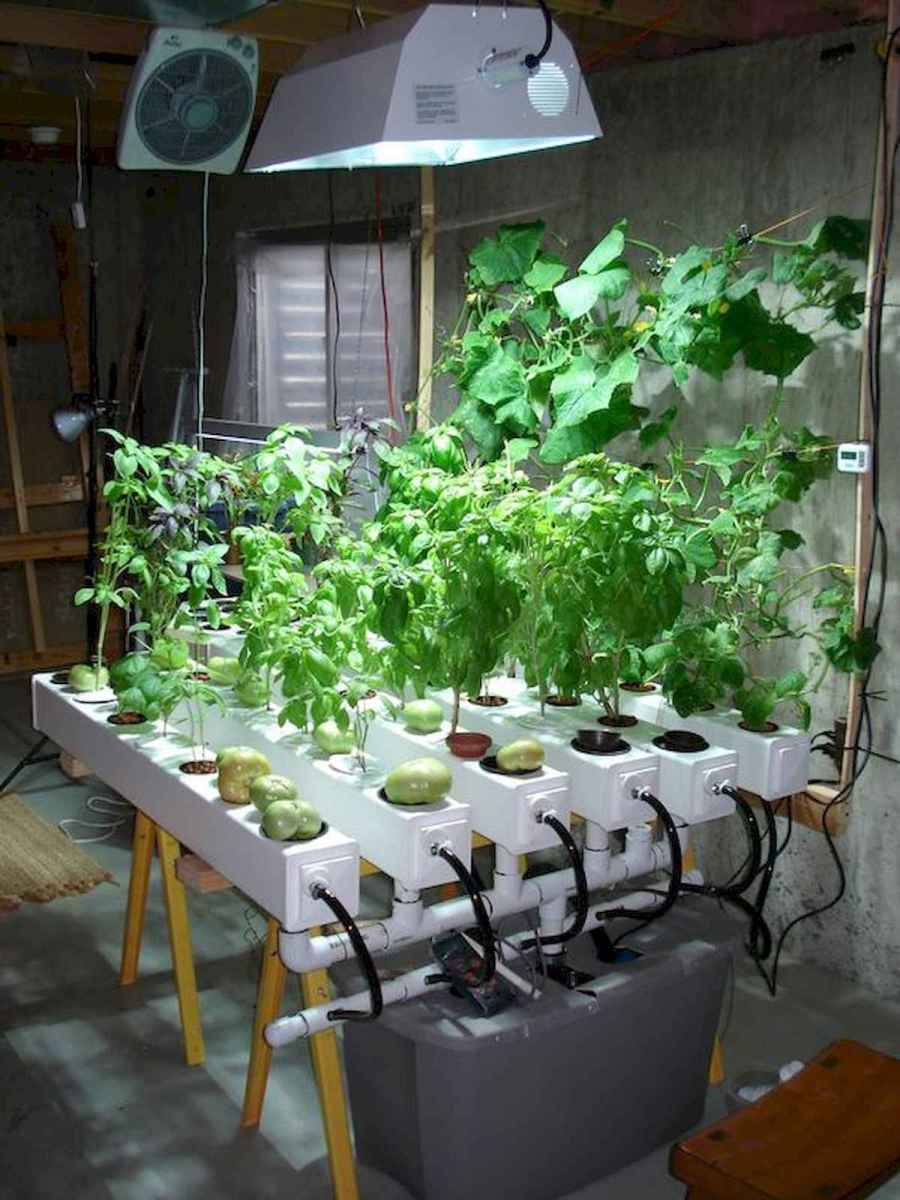 40 Easy To Try Hydroponic Gardening For Beginners Design Ideas And Remodel (1)