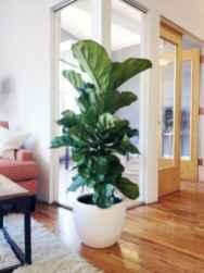 50 Best Indoor Garden For Apartment Design Ideas And Remodel (26)