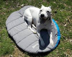 review of the chuckit dog travel bed