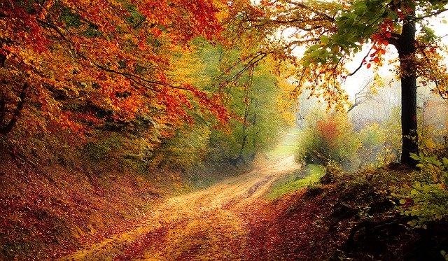 Das geheime Leben der Bäume: ein Weg im herbstlich roten Laubwald, sehr romantisch