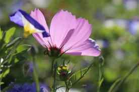 Blume-im-Gegenlicht