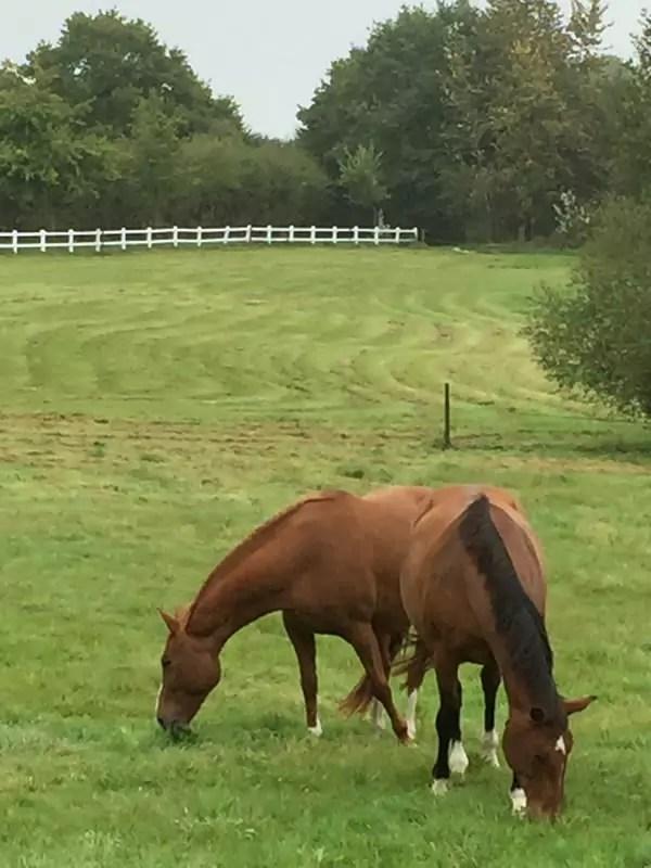 Des chevaux pour coachingbyhorses