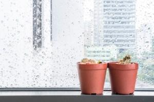 dead-house-plants-cactus