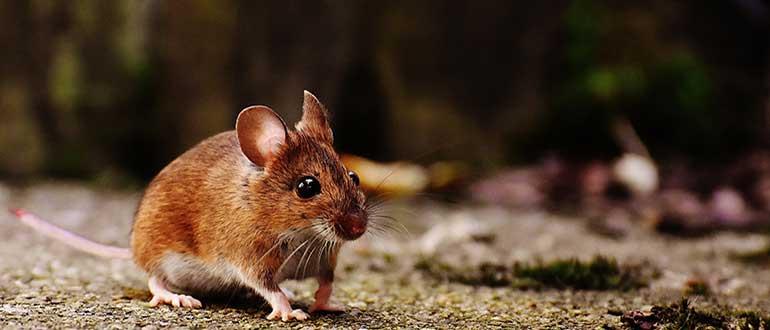 Il cambiamento spiegato.. dai topi!