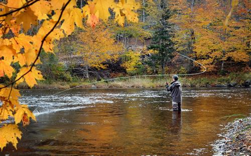 Fall Feather Wallpaper Fall Trout Fishing Coach Net