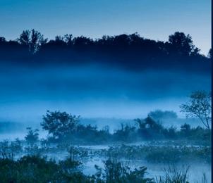fog rising from a wetland