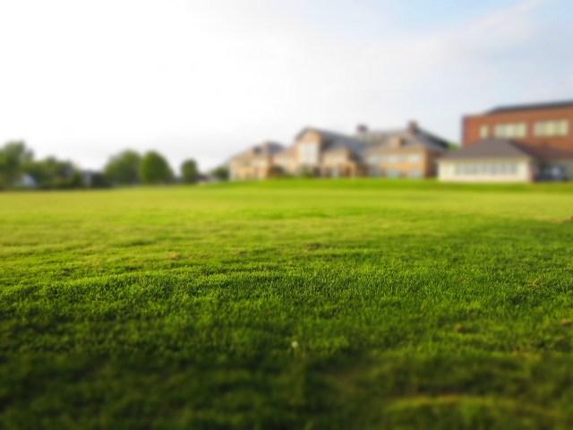 lawn-768316_1280