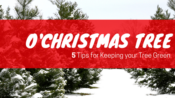 5 Tips for Keeping your Christmas Tree Green