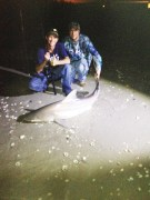 Brandon Gatewood and William Hawley with a nice Bull Shark caught at Sebastian Inlet on a floated out Jack Head
