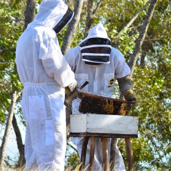 two men examining beehive
