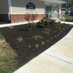 Flower bed Flower bed landscaping