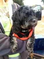 coastal:blk doggie