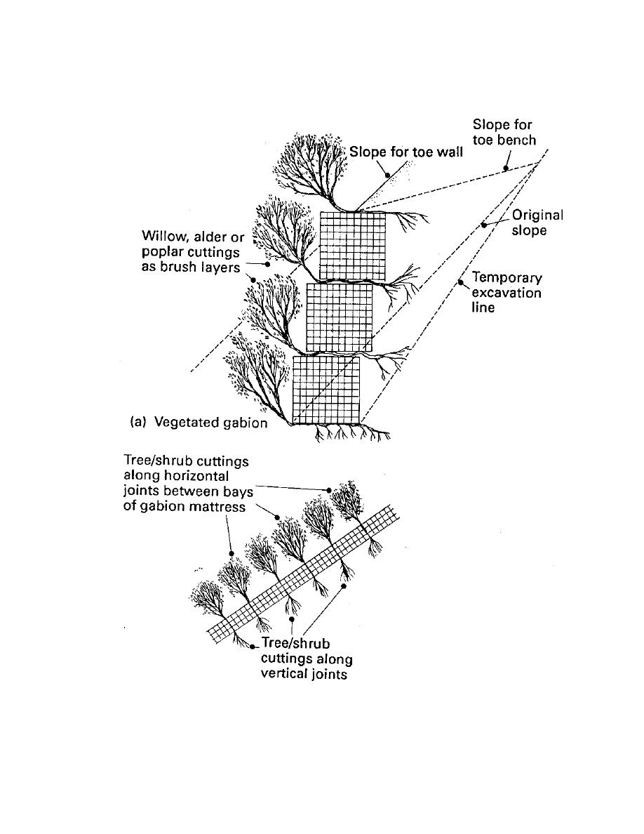 Figure 13. Schematic of gabions used with woody plants to