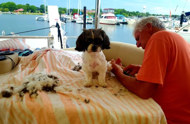 Dog Grooming on a boat