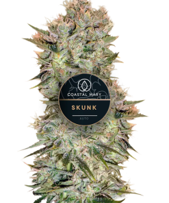 Skunk autoflower feminized for Coastal Mary Seeds