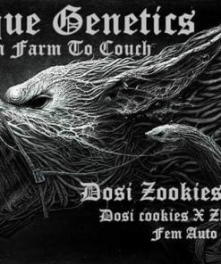 Dosi Zookies by Aeque Genetics for Coastal Mary Seeds