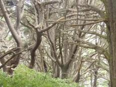 Fabulously menacing trees