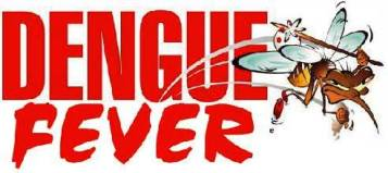 dengue 15