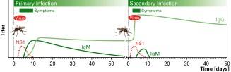 dengue 16