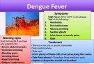 dengue 8