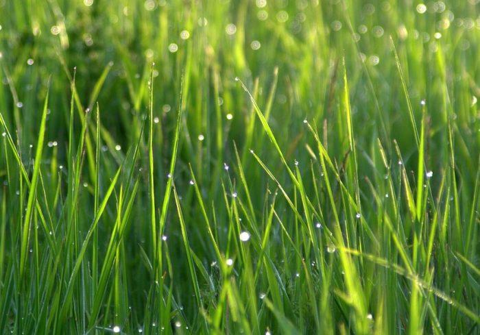grass-1369150_1280
