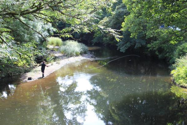 Fishing at Notter Bridge