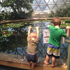 The 2 boys looking in to a fish pond in the Tropical Dome at Brisbane Botanical Gardens - Mount Coot-tha