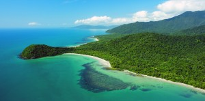 A picture the Daintree - where the rainforest is at the ocean's edge