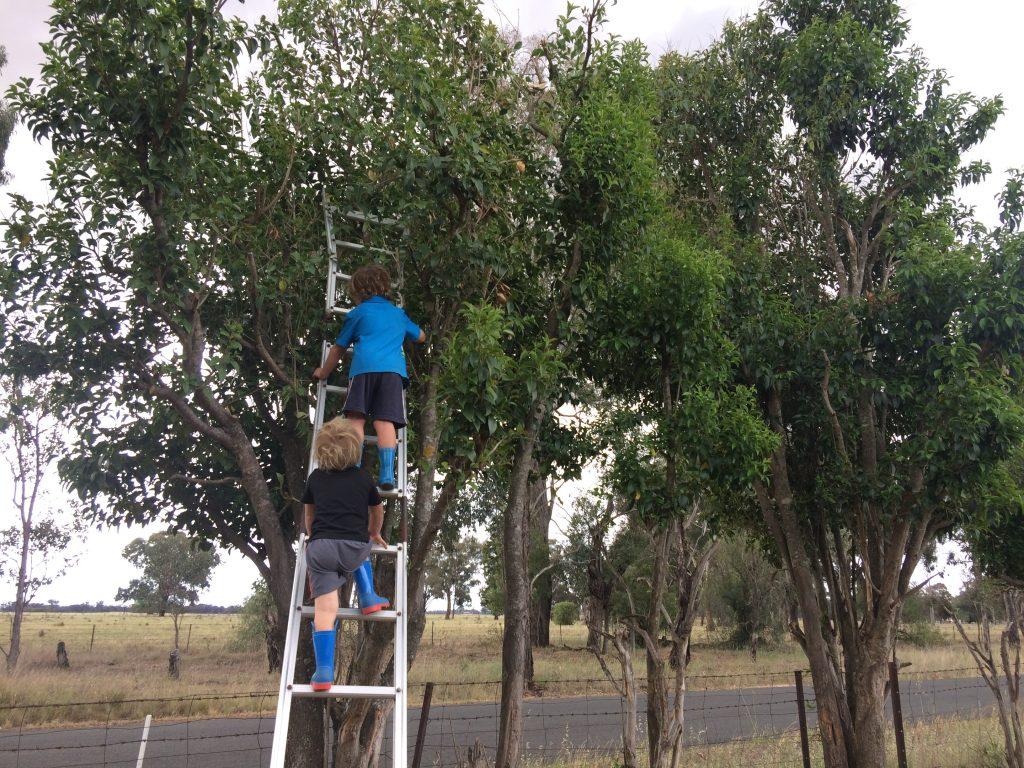 2 boys climbing a tree