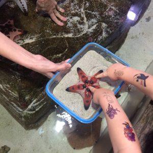 A starfish at Sydney Aquarium