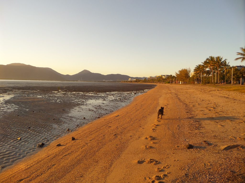 A dog running down the beach on Cairns Esplanade
