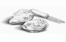 oysters-hand-drawn