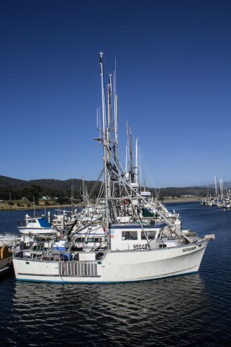 Pillar Point Harbor. Dawn Page/CoastsideSlacking