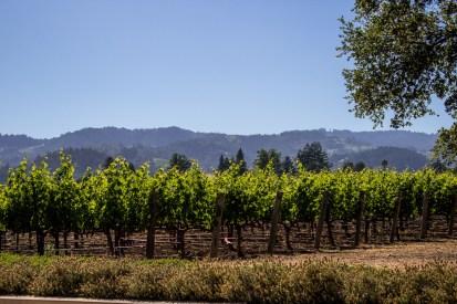 Hall Wines, St.Helena. Dawn Page/Coastside Slacking