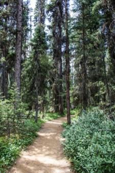 Path to the Paint Pots of Kootenay National Park, BC, Canada. Dawn Page / CoastsideSlacking